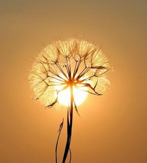 zon bloem hoop.jpg